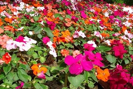 Fleurs de bach sommeil réparateur